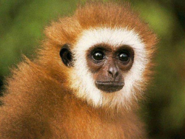 cheerful-monkey